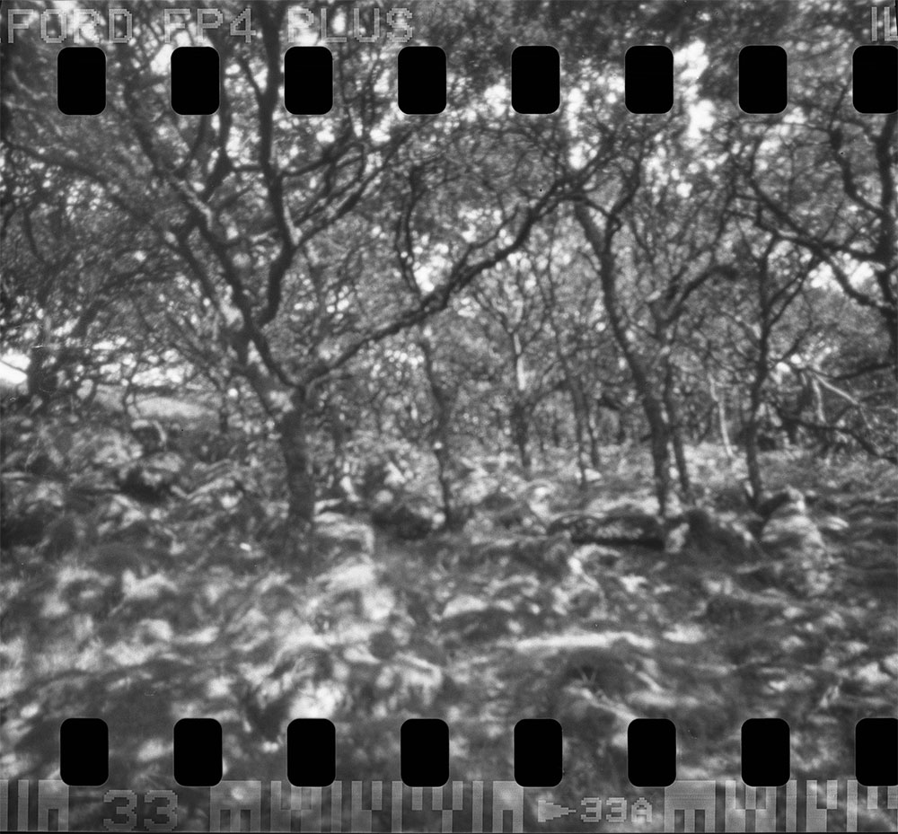 Wistman's Wood - pinhole photo